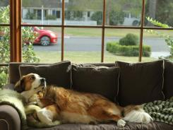 Volkswagen will feature Bolt, a 3-year-old Australian Shepherd and St. Bernard mix, in this year's Super Bowl ad.
