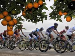 Riders pass an orange grove during the Tour of California cycling races, in Piru, Calif.