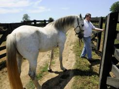 David Williams leads a horse at Waterfall Farms in Wartrace, Tenn., about halfway between Nashville and Chattanooga.