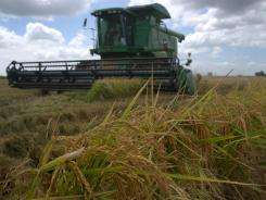 Rice is harvested in Louisiana in this file photo.