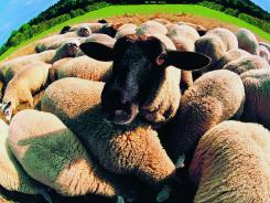 You've got to set yourself above the herd to get noticed in today's job market.