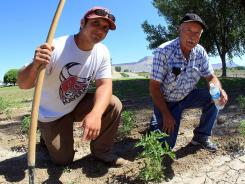 Zay Lopez, left, answered a Craigslist ad in Grand Junction, Colo., and within an hour of meeting Bob Beasley, sold him his tractor and was offered and took a job to farm 3 acres for Beasley.