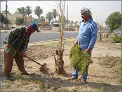 Naem Balboul, 64, right, and other Baghdad city workers plant saplings and resod grass. The city is spending more than $56 million to bring more green spaces to the beleaguered capital.