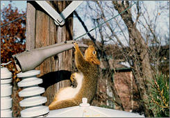 The Lincoln Electric System uses a squirrel guard from a company called Central Maloney. The picture shows an older version of squirrel guard on a transformer bushing.