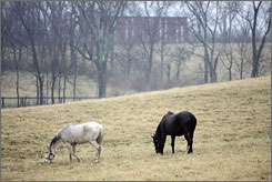 Horses graze in a field on a horse rescue farm near Nicholasville, Ky. on Feb. 13. Kentucky, famous for its sleek thoroughbreds, is overrun with thousands of horses no one wants  some of them perfectly healthy, but many of them starving, broken-down nags.