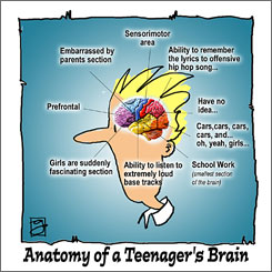 'Anatomy of a Teenager's Brain' shows a humorous side of American teens.