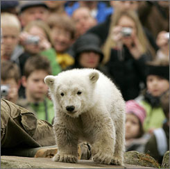 Visitors watch Knut at his enclosure in Berlin zoo on April 9.