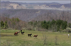 Horses run across land reclaimed from a former coal mine in West Virginia. Former mines have been reclaimed for use as a hardwood flooring plant and an airport.