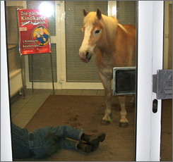 A photo released by police shows a horse standing next to a sleeping man in the foyer of a bank in the east German village of Wiesenburg on Monday.