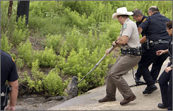 Texas Game Warden David Chavez and San Antonio police officers use a pole and a rope to guide an alligato back into a drainage ditch. The alligator was blocking traffic on a section of Interstate 410.