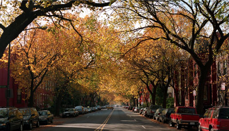 Elm trees line 11th Street in Washington, D.C. The trees are exceptionally tolerant of city life.
