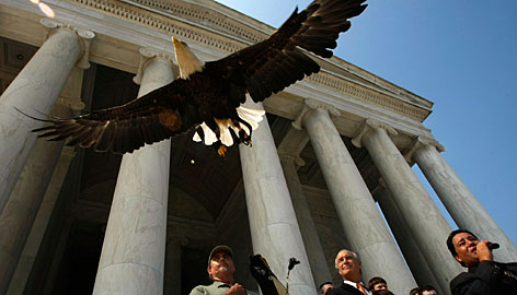 Challenger is released during an event at the Jefferson Memorial marking the removal of the bald eagle from the endangered species list on Thursday. Despite its new status, the bird will still be protected by state statutes and a federal law passed by Congress in 1940 that makes it illegal to kill the bald eagle.