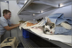 Volunteer Millie Williams checks on the cats after spay-and-neuter surgery on the Big Fix Rig in Brandon, Miss.