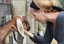 "Deb Rutgers, who has lived at Lake Village homestead since December 2006 and loves the quiet serenity, plays with a young goat. She said, ""there's a rightness to it all."" About the animals who roam all over the farm, Deb said, ""they provide for us, and we provide for them."""