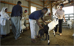 Olu Egunyomi, center, and his aunt Emily Egunyomi, right, originally from Nigeria, pick out a goat Sept. 29.