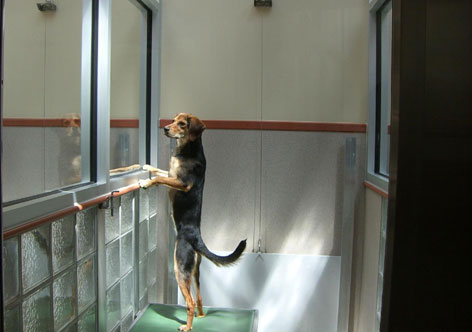 The Washington Animal Rescue League's dog dens are made of glass, Corian and stainless steel to allow for maximum natural light.