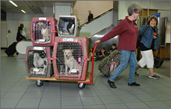 Anna Geraghty, left, and Marianna Massa tow through Logan International Airport in Boston a cart of dogs from Puerto Rico.