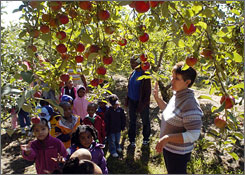 Jaye Reisinger, a co-owner of Leaman's Green Applebarn, conducts a tour of the orchard in Tittabawassee, Mich., in September. Eating an apple before lunch could help you eat 190 fewer calories.
