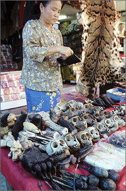A vendor from Burma, seen here in Thailand in May 2003 offers endangered animal bones and skins for sale to tourists.
