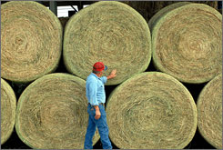 Ronnie Lowe looks over bales of prairie grass that were shipped to Kentucky from Kansas, Oct. 18, to be sold at auction. Many farmers report having to downsize their cattle herds because of the soaring costs of hay in drought conditions.