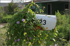 Morning glories cover a mailbox at an abandoned home on Tupelo St. in the Lower Ninth Ward.