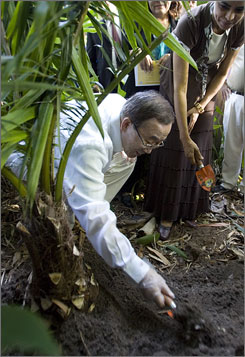 U.N. Secretary-General Ban Ki-moon plants a tree at the botanical garden in Belem, Brazil.