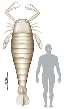 This is a computer-generated image comparing a human and an ancient sea scorpion. A fossil found in Germany indicates the ancient sea scorpion was once 8 feet long, making it the biggest bug ever known to have existed.