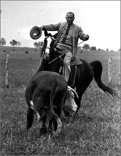 "President Johnson, riding the horse ""Lady B,"" rounds up a Hereford on his Texas ranch in 1964."