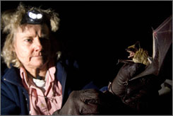 "Karen Krebbs nets a bat at Arizona's Chiricahua National Monument in May. She since has abandoned research near the Mexican border. ""I'm just not willing to risk my neck anymore,"" Krebbs says."