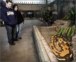 Ian Stewart, left, and Carrie Hoover visit the Columbus Zoo and Aquarium in Columbus, Ohio. and visit Fluffy, a Reticulated Python on Friday. Bob Clark, the breeder from Oklahoma City who raised the python from a hatchling, initially resisted the zoo's purchase offer but said he's happy with the outcome.