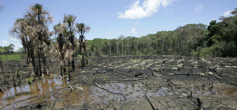 Burned trees are seen in a deforested area of the Amazon town of Puerto Maldonado, Peru, on the border with Brazil, in November.