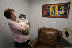 "Rose Terry, 55, a resident of the Shade Tree women and children's shelter in Las Vegas, visiter with her six-year-old Norwegian Forest cat Byron at the shelter's ""Noah's Animal House."""