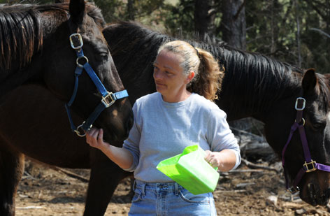 Pat Muncy offers treats to new arrivals at her Roanoke Valley Horse Rescue shelter in Hardy, Va.