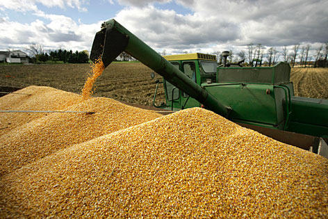 Dale Rossman empties a load of corn into a truck from his combine while harvesting corn on his farm in Spring Mills, Pa. in this Oct. 28, 2007 file photo.