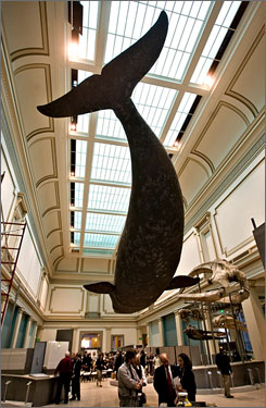 The Smithsonian's National Museum of Natural History previews a new exhibit, Ocean Hall, dedicated to marine science and developed in collaboration with the National Oceanic and  Atmospheric Administration, on Thursday.