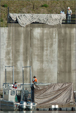 Police investigate the death of sea lions held in this cage at the Bonneville Dam on the Columbia River between Washington and Oregon, east of Portland May 4.
