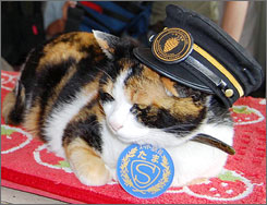 "Tama the cat, the stationmaster at Kishi railway station in Kinokawa, western Japan, hard at work. Here, Tama sports her stationmaster cap and a neck sign reading ""Super Stationmaster Tama"" on May 16."