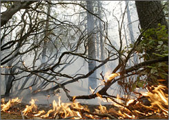 California firefighters were battling more than 1,400 blazes Monday. Here, fire crawls along the forest floor near Magalia, Calif., on Friday.