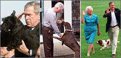 A new survey shows that among pet owners, voters prefer Republican contender John McCain over his Democratic rival, Barack Obama. Here, the last three presidents are seen with their pets, left to right, President Bush with Barney, President Clinton with Buddy, and President and Mrs. Bush with Millie.