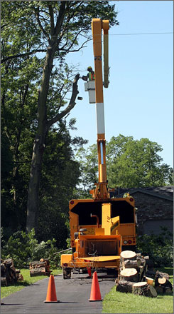 An employee of a tree-cutting service works outside a home in Green Township, Ohio, in June. Trimming trees can help prevent power outages.