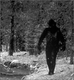 One well-known alleged image of Bigfoot: this shot from a 1977 film that claims to show the creature cavorting in the hills of northern California.