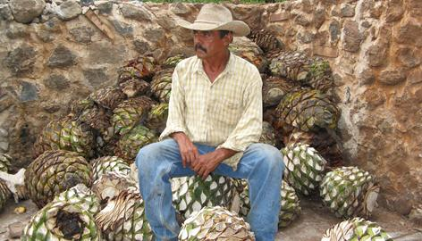 "Agave farmer Cruz Reynosa sits on ""pineapples,"" the trimmed hearts of blue agave plants, at his farm near Tequila, Mexico. Many of Reynosa's neighbors are increasing the amount of acreage they are devoting to corn and other crops because of higher prices for food crops worldwide."