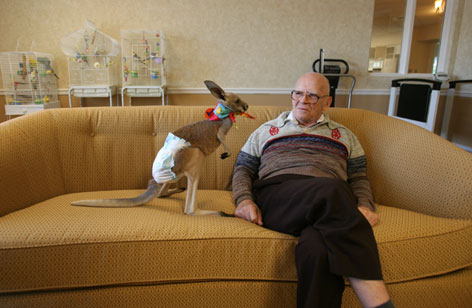"Paul Mancinelle, a resident at the Silverado Senior Living Aspen Park Community, enjoys the company of Marlee, a red kangaroo. Some nursing homes and senior-living centers have ""facility pets"" that live there year-round. Others allow people to bring their pets with them."