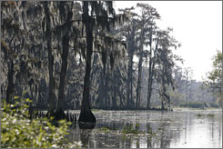 Healthy freshwater marshes within Louisiana?s Mandalay National Wildlife Refuge of Terrebonne Parish serve as a wind buffer. Still, the state loses about 15 square miles of coast a year.