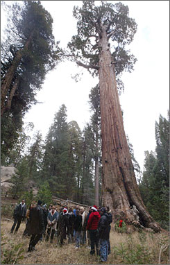 The government is warning that climate change could endanger California's giant sequoia tees. Here, people gather beneath the General Grant Tree, a giant seqoia at Kings Canyon National Park in California.