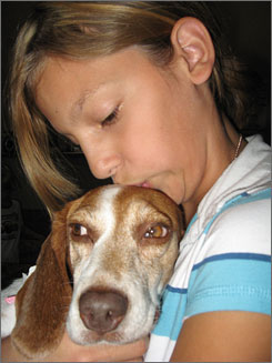Braxton Perez, 11, on Sept. 7 holds Lindie, one of 28 beagles rescued from a puppy mill in Missouri. Arizona Beagle Rescue in Avondale, Ariz., said the dogs were kept barely alive in wire cages.