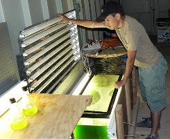 Michael Bellefeuille looks at algae inside a test tank at the XL Renewables Inc. research facility in Casa Grande, Ariz., in May 2008. With record fuel prices, everyone from Chevron to British energy company BP wants to find out how to make fuel from quick-growing algae.