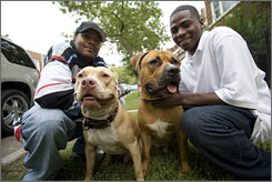 Reformed dogfighters Sean Moore, 37, left, with his dog Jigga, and George Brent, 18, with Red, now work with the Humane Society on obedience training.