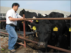 Charles Shao, an American, is CEO of Huaxia Dairy Farm, about an hour from Beijing. Shao says the company's spending of millions on quality-control standards is now paying off for the dairy.