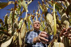 Bob Bowman inspects one of his cornfields in Clinton County, Iowa. He sells some of his crops for use as ethanol and wants the next president to support it as an alternative fuel.